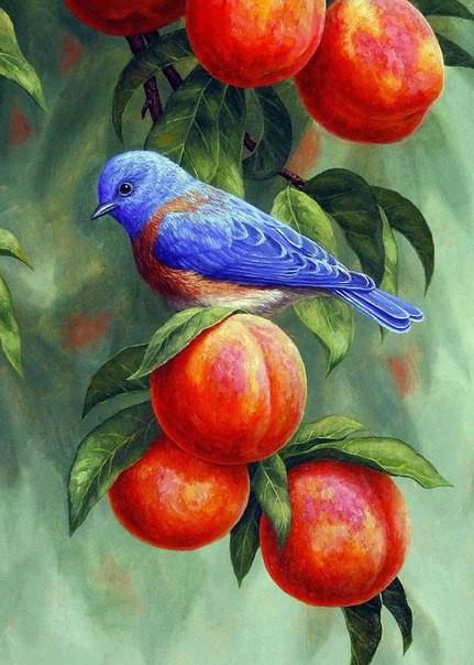 Картина по номерам 40x50 Птичка на спелых абрикосах